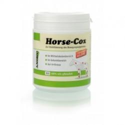 Horse- Cox